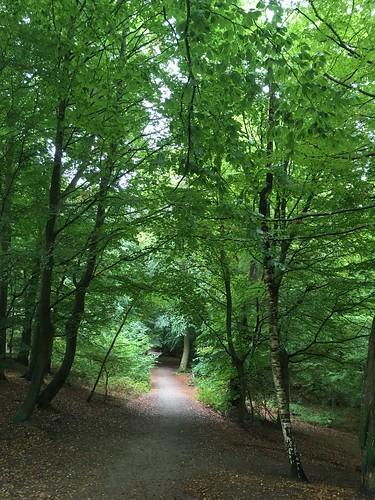 pålsjö forest, helsingborg