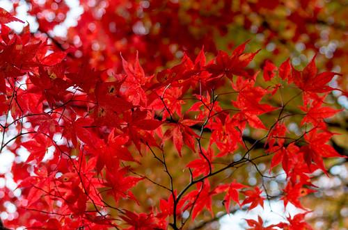 紅葉狩り - 東山公園 23