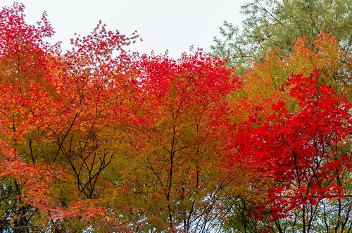 紅葉狩り - 東山公園 01