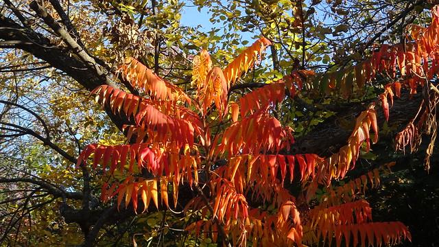 Leaves as Pennants