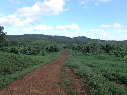 coffee-plantation-8