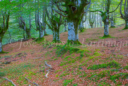Parque Natural de #Gorbeia #DePaseoConLarri #Flickr      -1359