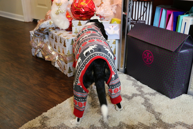 dog-pajama-pet-onesies-4
