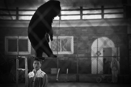 Broken Bear, Seven Star Park, Guilin, China