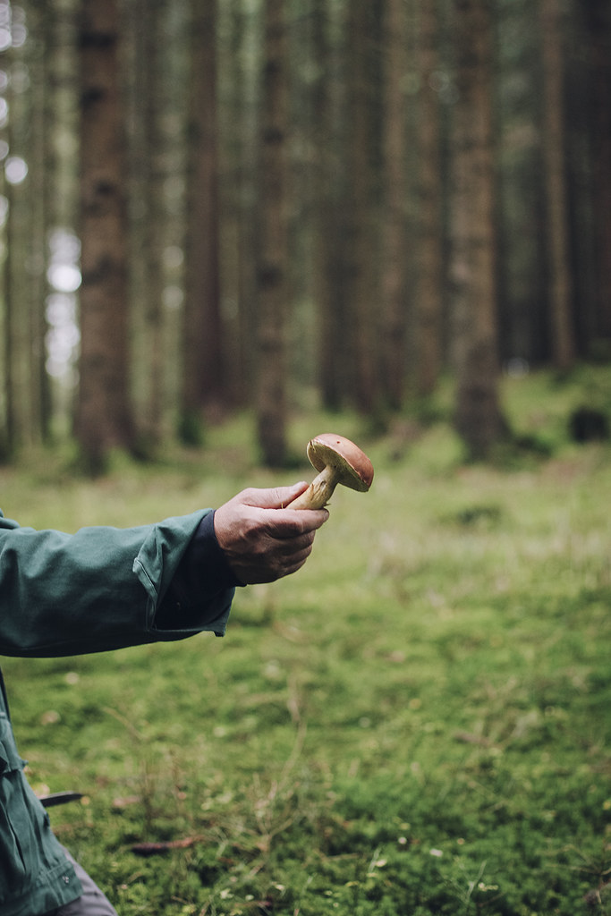 picking_mushrooms_by_Amelie_Niederbuchner_photographer_munich_IMG_0092ed
