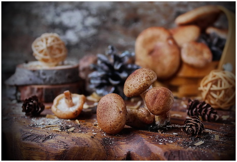 ...honey agaric mushroom