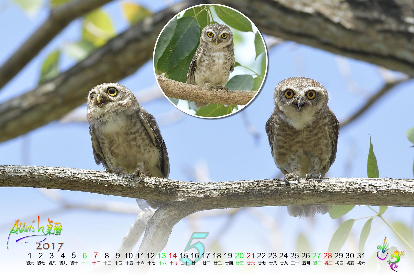 Calendar_03alder_05