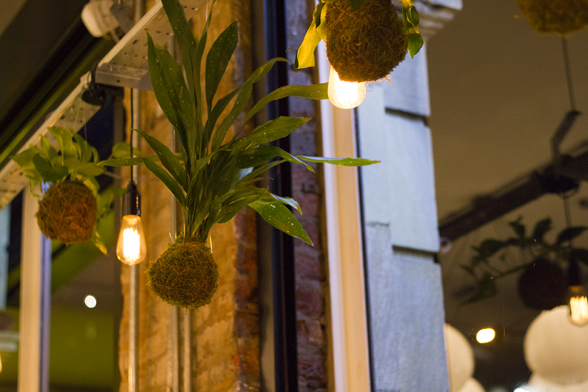 hanging-plants-evelyns-manchester