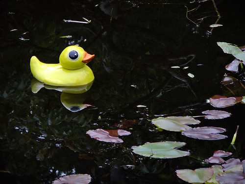 A 'Rubber Ducky' sculpture installation at Dublin's Botanical Garden