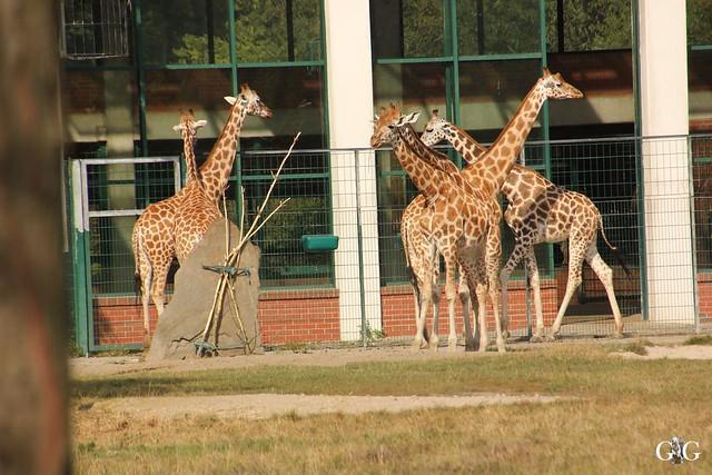 Tierpark Friedrichsfelde 25.09.1681