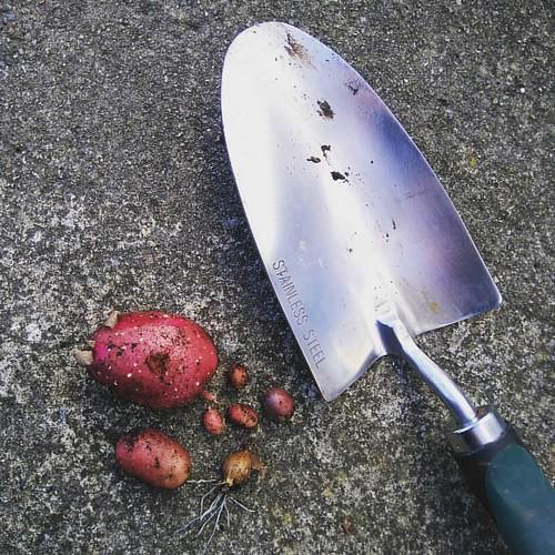 I think I'll make a stew.. 😂 #harvest