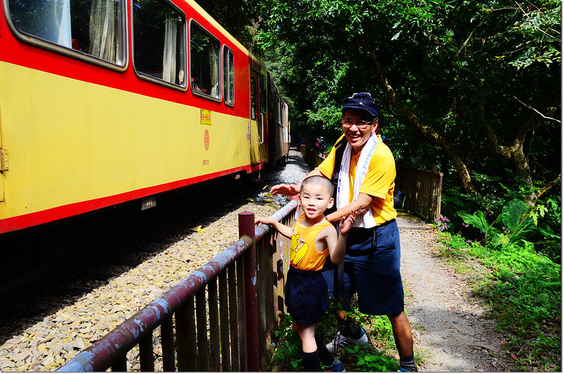 阿里山森林火車 3