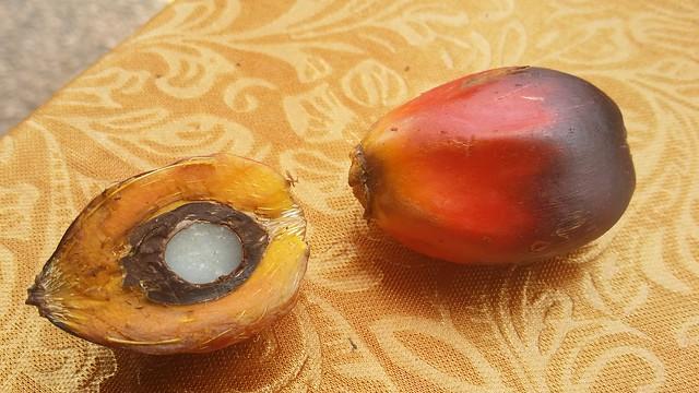 Olio di palma: fa male alla salute? È cancerogeno? Meglio senza olio di palma? Tutte le risposte