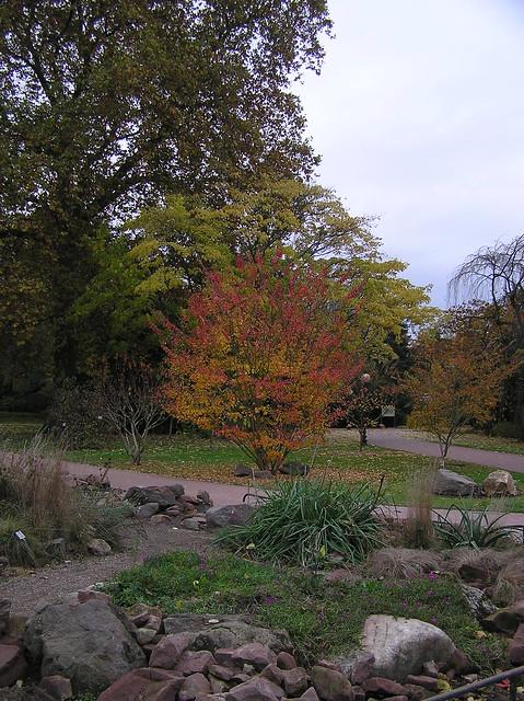Köln Botanical Garden