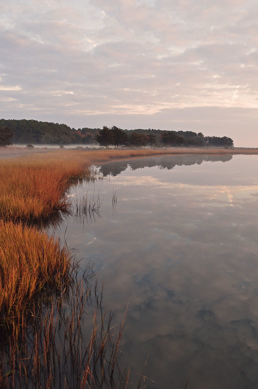 Metompkin Bay (12)
