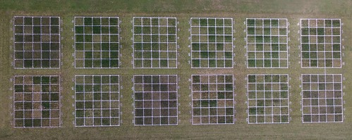 Aerial drone photo of turf-soil carbon research plots. There are four different species (Kentucky bluegrass, tall fescue, perennial ryegrass, and creeping red fescue) under two different clippings managements (clippings bagged and removed, or clippings mulched back into the turf), three different mowing heights (two, three and four inches), and five different monthly nitrogen fertilization rates (0, 0.2, 0.4, 0.6, and 0.8 lbs N per 1000ft2 each month May through November).