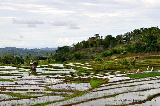 Rice Terraces in Candijay, Bohol