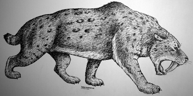 Smilodon fatalis (reconstruction of the saber-toothed tiger) (Late Pleistocene; California, USA) 1