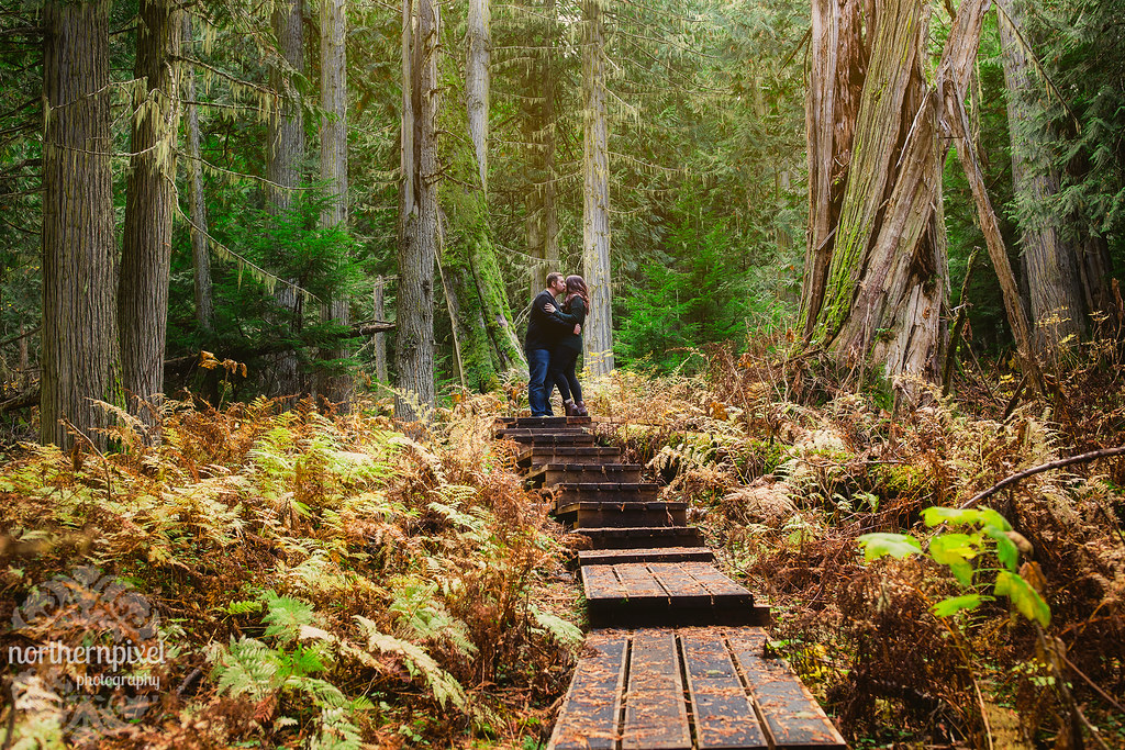 Engagement Photography Session at the Ancient Forest