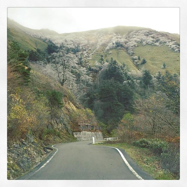 「伊予富士の霧氷」 景色が開けた午後。 #ufoライン #ドライブ #伊予富士 #霧氷
