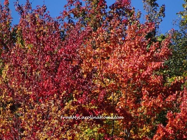 Fall 2016 trees