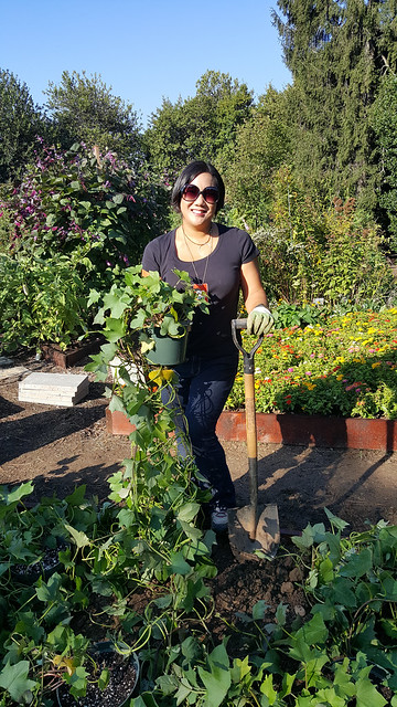Leticia Barr from Tech Savvy Mama Plants Fall Vegetables in the White House Kitchen Garden