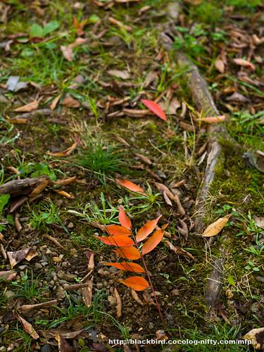 Autumn #01