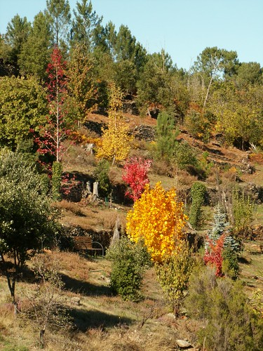feuillages d'automne 2016 30545631451_bf3ed7eb41
