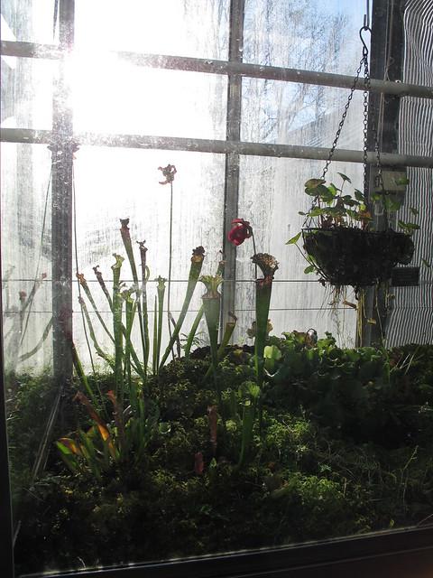 saturday, botaniska trädgården, lund