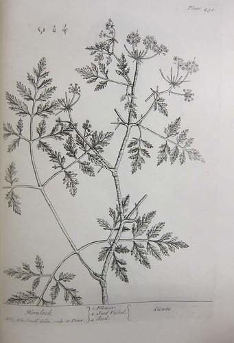 herbal18