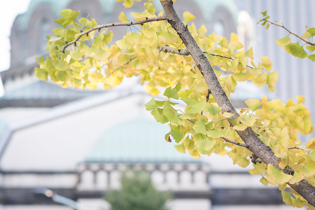 御茶ノ水・ニコライ堂とイチョウの紅葉