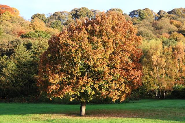 Walker Wood, Baildon