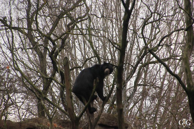 Tierpark Friedrichsfelde 20.11.201641