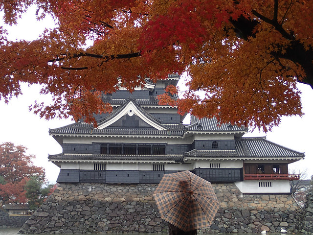Matsumoto Castle with Koyo Red Autumn Leaves Maple Tree viewed by Man with Umbrella in foreground