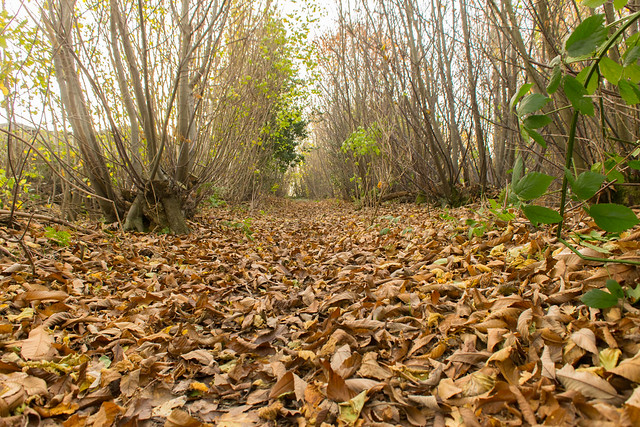 DSC_5462 Autumn woodland