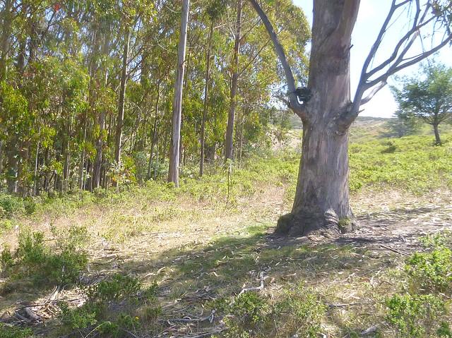 cam trap in tree