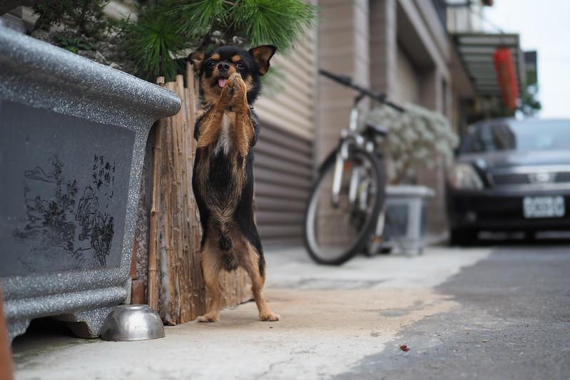 迷你看門狗|Olympus 25mm f1.2 PRO