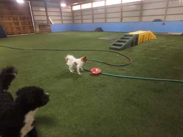 11/15/16 Frisbee/Tennis Ball Fetch! :D