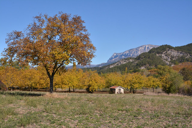 """L""""arbre et la montagne"""