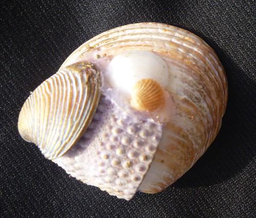 Šperky z mora 25