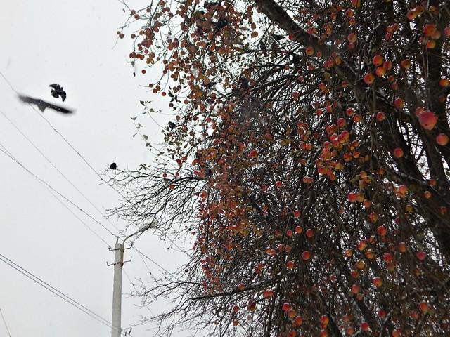 История про яблони другие деревья | HoroshoGromko.ru