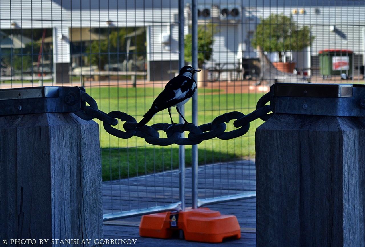 Самый невезучий город Австралии darwin17