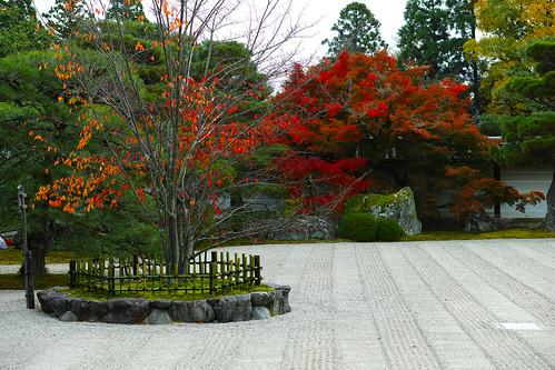 仁和寺 左近の桜