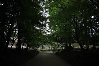 少し早めの紅葉を愛でに京都へ(3)