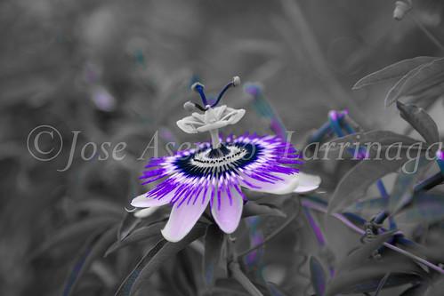 Flor  #DePaseoConLarri #Flickr           -1316