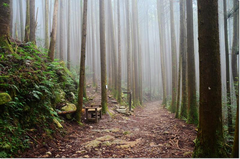 橫嶺山生態步道岔路