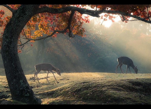 Autumn Morning in Nara