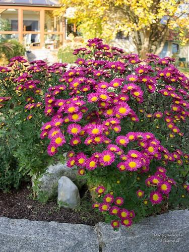 Herbstliche Blütenpracht