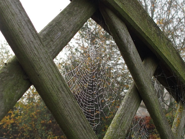 Halloween: Fence cobweb