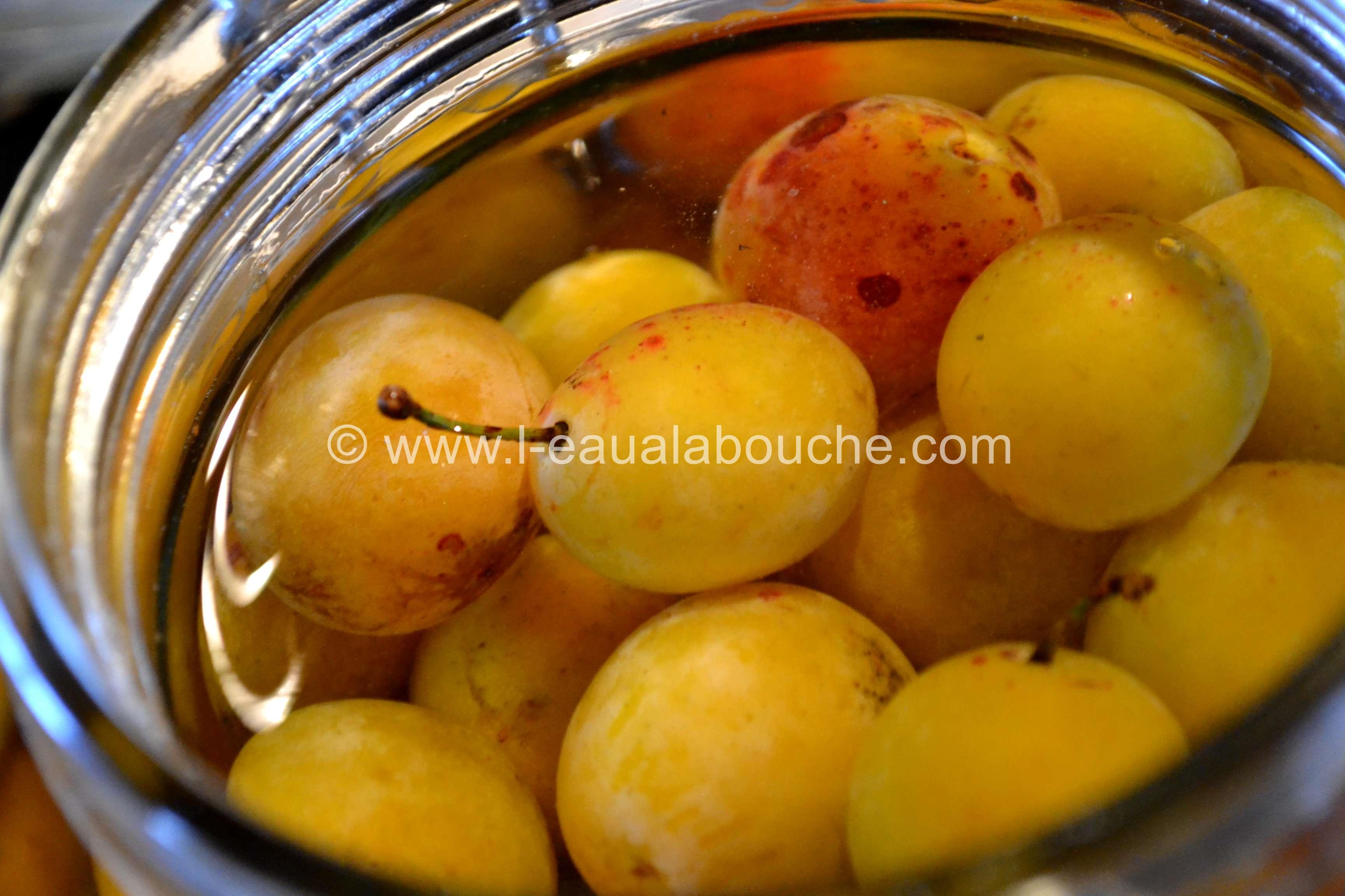 Mirabelles au Pfümli-Eau de Vie de Prune © Ana Luthi Tous droits réservés 0012